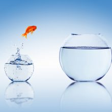 Fish changing its bowl